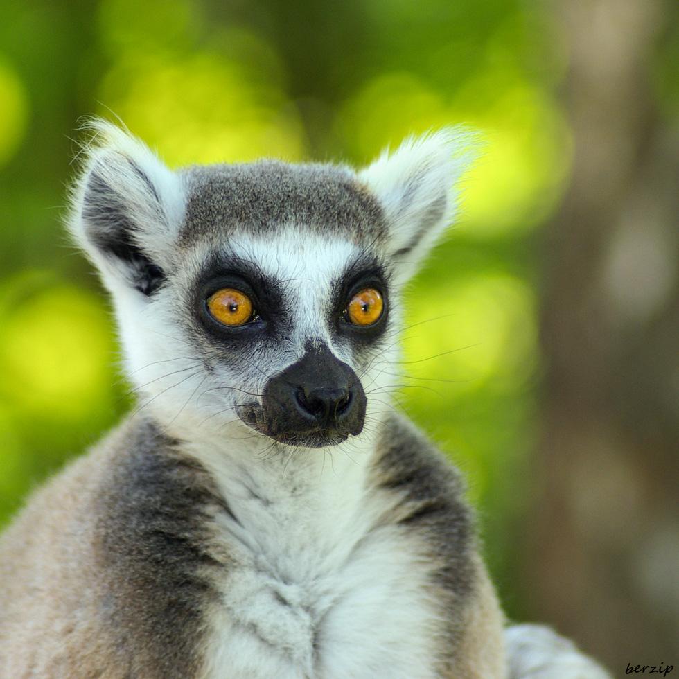Zoos / Parcs animaliers - Page 6 34845256275_5016e173b7_o