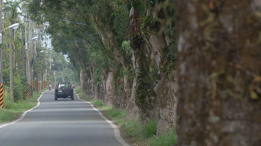 911-2-7 拓寬施工前,路樹要如何移植?六龜區公所和公路總局雙方,還沒有共識。