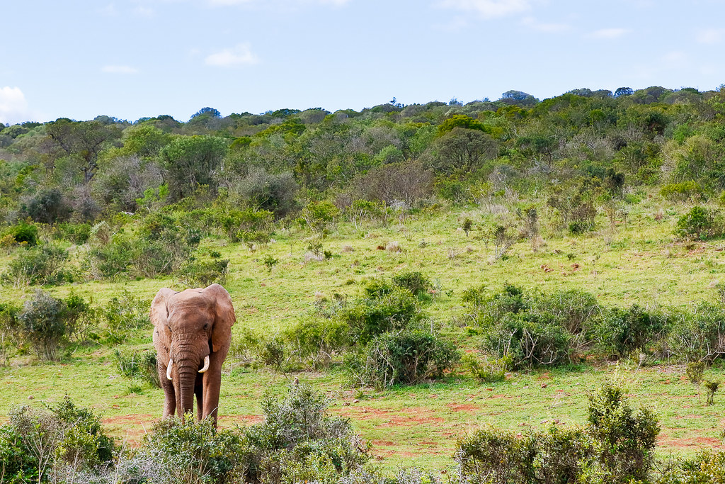 Elephant surrounded with bushes