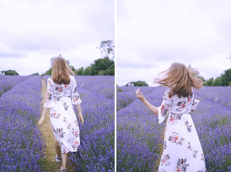 lavender dreams 8