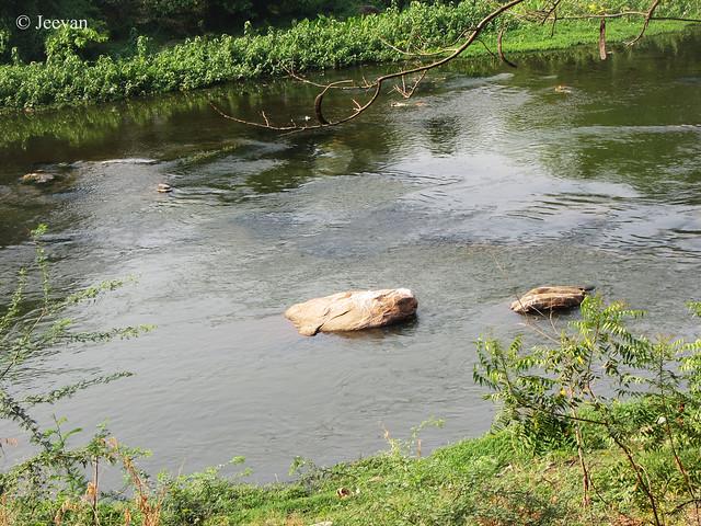 Bhavani River @ Sathyamangalam