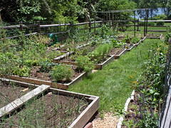 backyard garden 2017-06-21