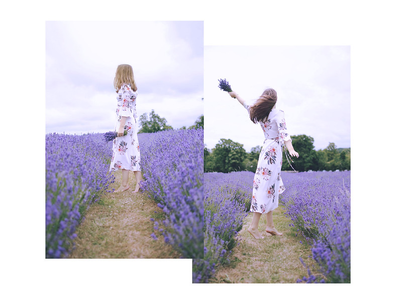 lavender dreams 5