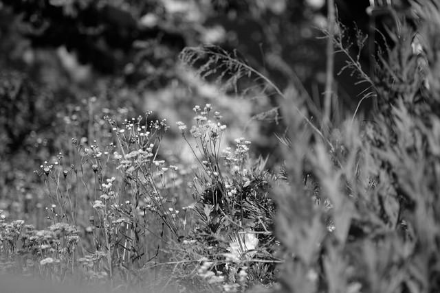 A bushy garden
