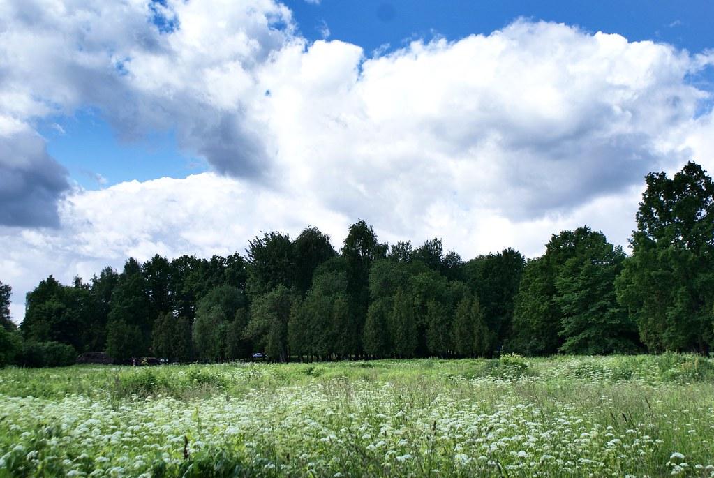 Champs de fleurs sauvages à l'ouest de Riga en Lettonie.