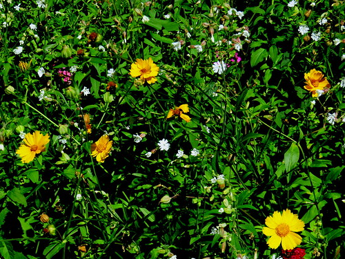 wild flower garden