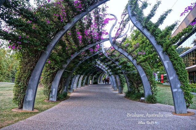 Day 5 - Brisbane South Bank Grand Arbour