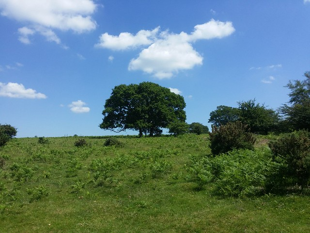 Hot day on the Roborough Down