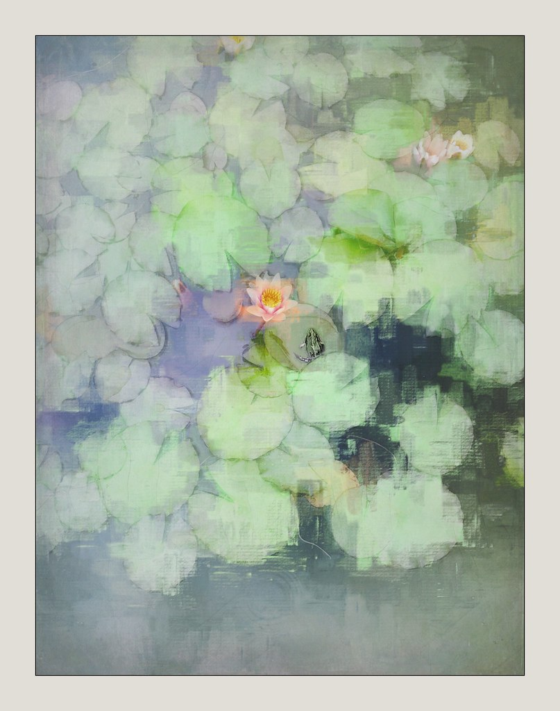 Water lilies and a frog