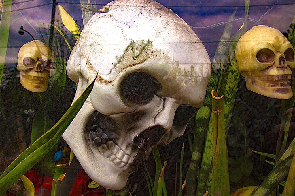 Three skulls--Toronto