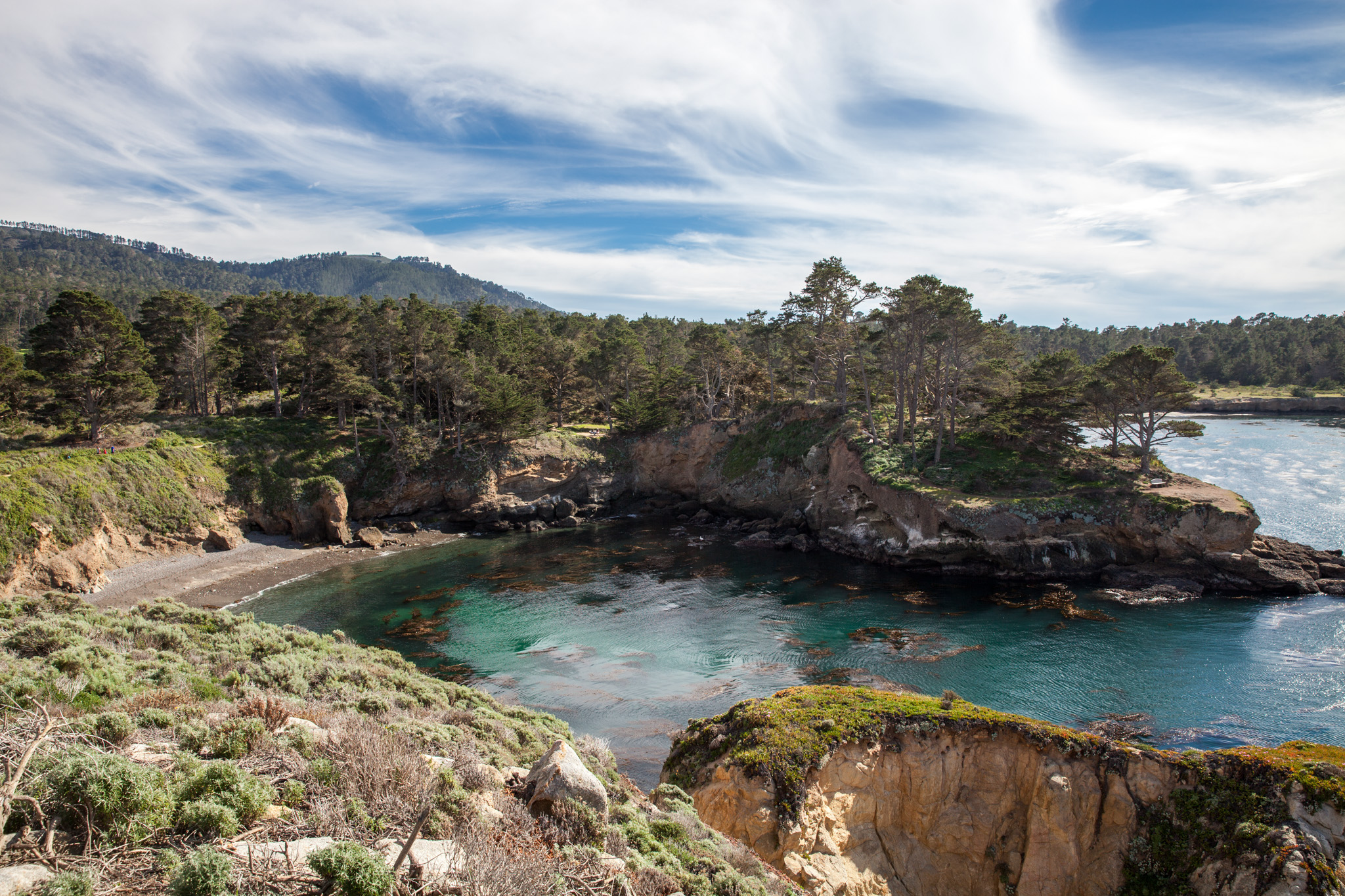 Point Lobos, by Virginia Mae Rollison