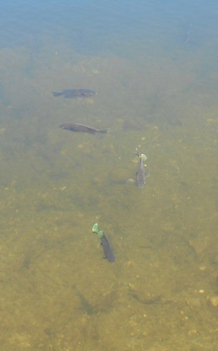 fish at Ashley Reservoir