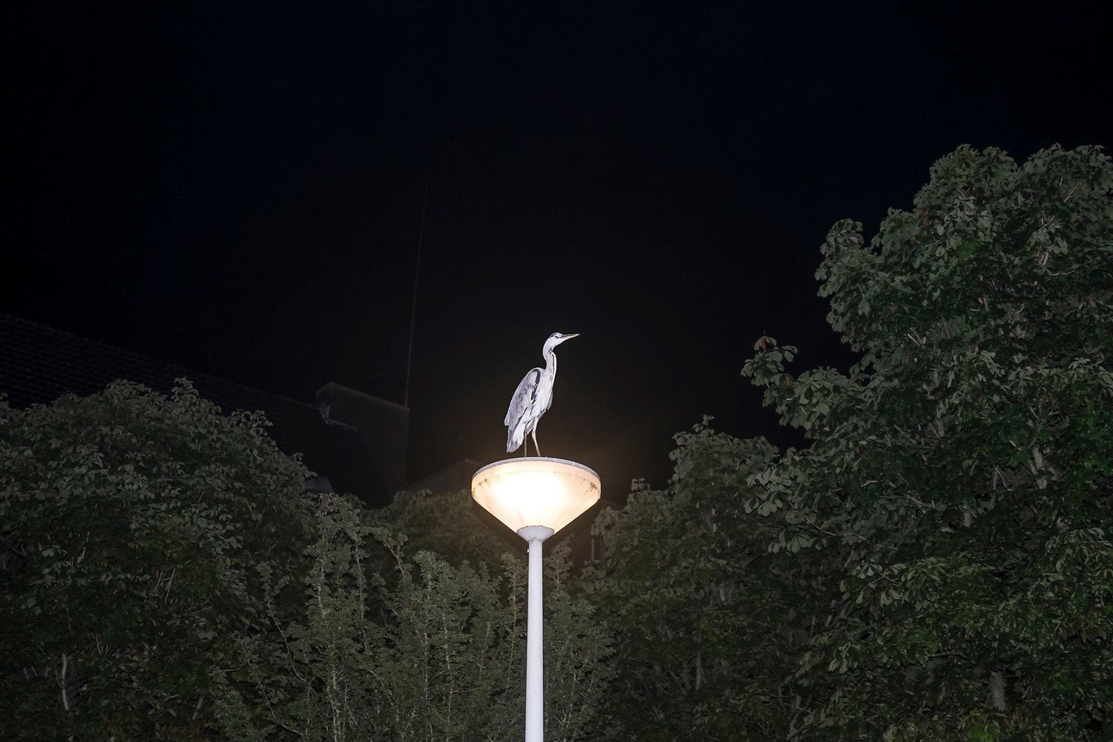Late night heron hunting | by juliehrudova
