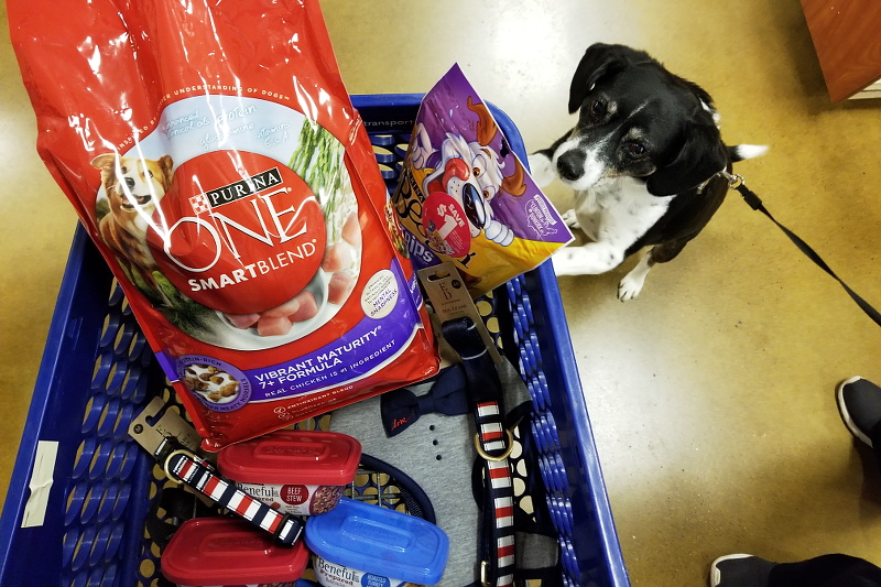 louis-beagle-dog-petsmart-shopping-trip-purina-3