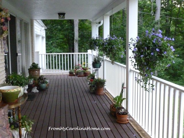 Late June Garden at From My Carolina Home