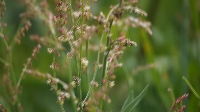 Wild grasses and flowers