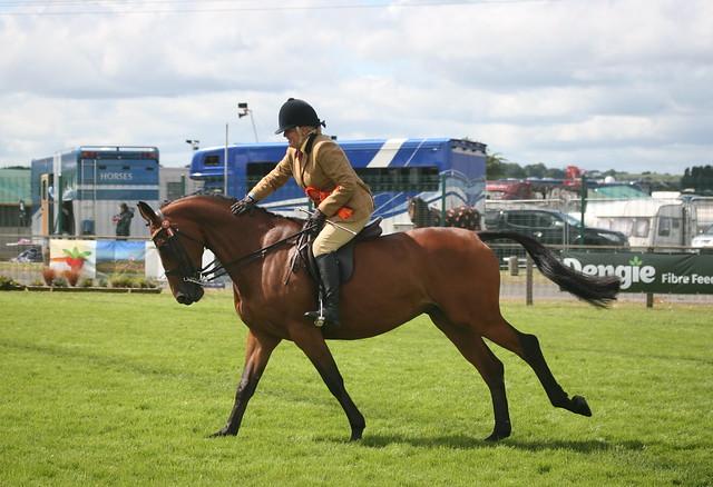 Novice Riding Horse