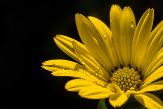 wet and yellow (explored 2017-06-27) | by holgerreinert