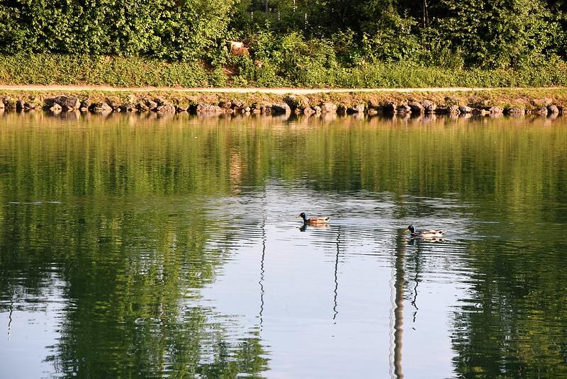 Ducks 11.06 (1)