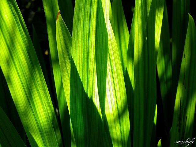 Leaflight 1