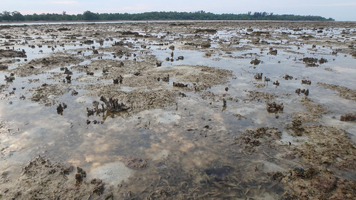 Seagrasses on Terumbu Raya