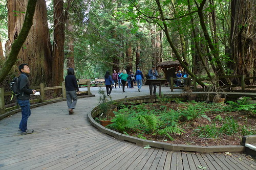 Muir Woods National Monument - Marin County California