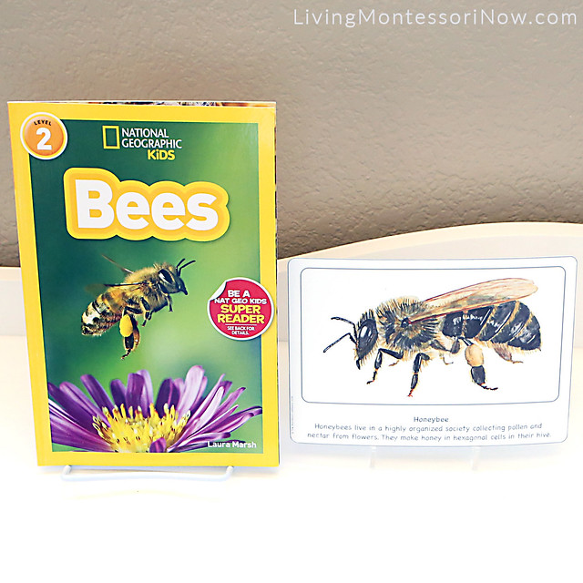 Bees Book with Honeybee Culture Card