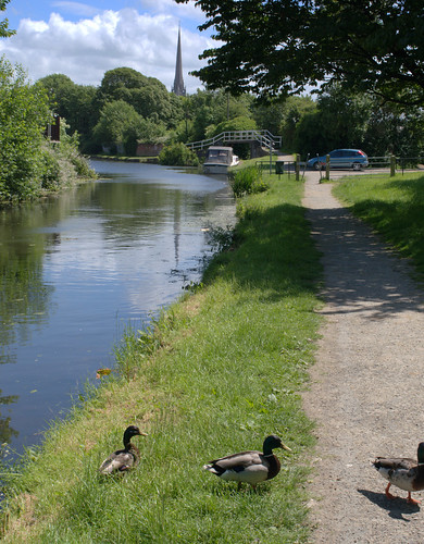Ducks on the path at Preston canal | by Tony Worrall