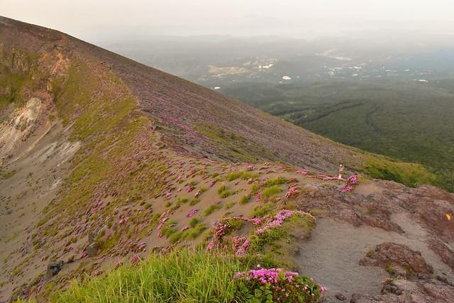 高千穂峰 御鉢に咲くミヤマキリシマ