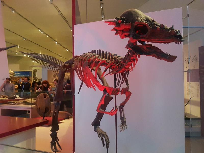 ROM FNL dinosaurs