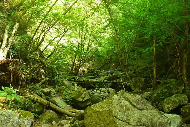 西丹沢登山 新緑と渓流
