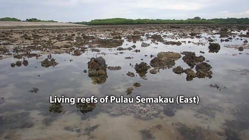 Living reefs of Pulau Semakau (East)