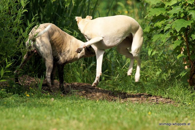 Tardis testet wie gefährlich die Hyäne ist!
