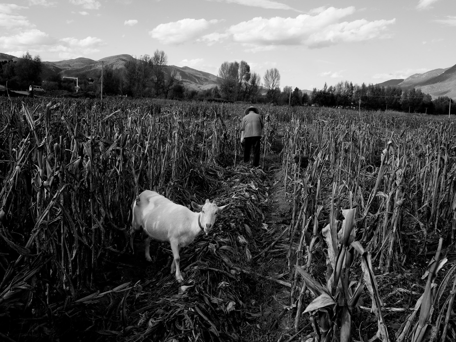 man and goat | by tzen xing