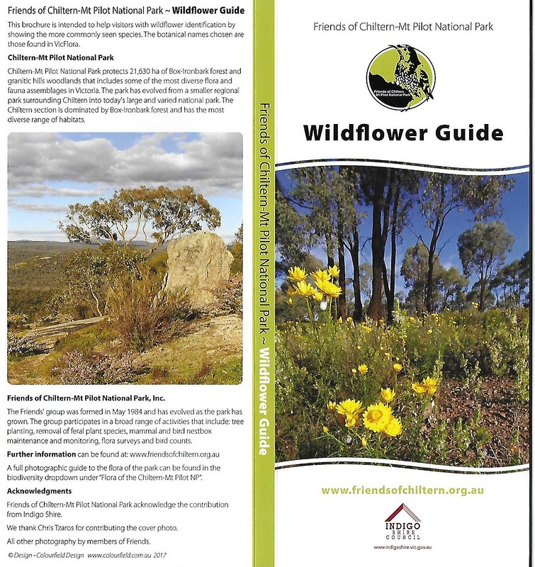 Wildflower Guide