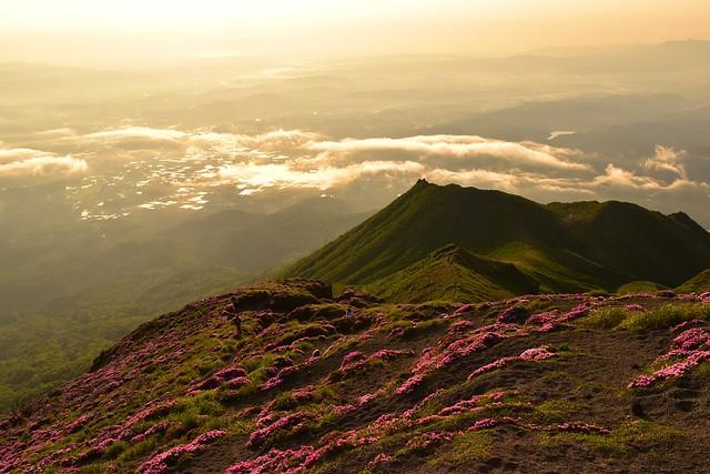 高千穂峰 山頂のミヤマキリシマの群生