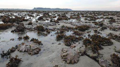 Living reefs of Terumbu Bemban, Jun 2017