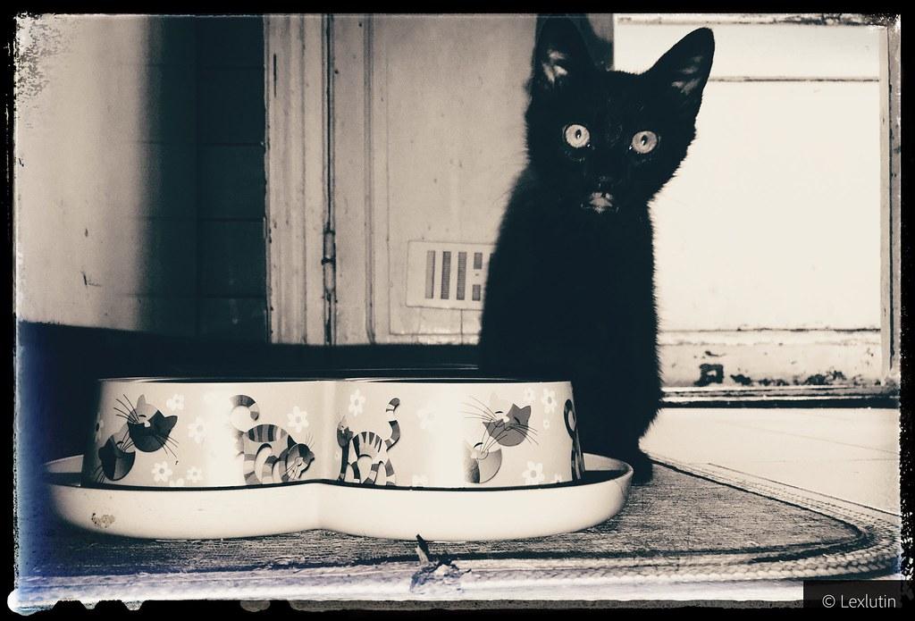 Je Proteste Contre Les Gens Qui Disent Que Les Chats Noir Flickr