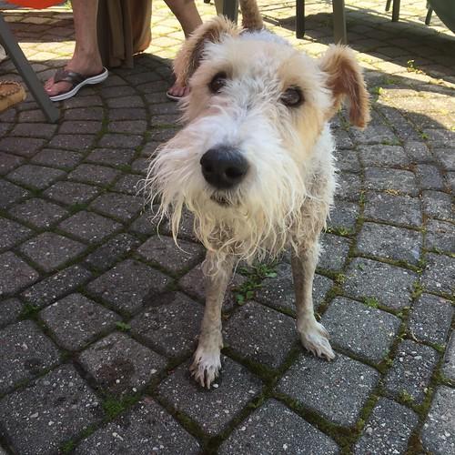 Piper, post swim