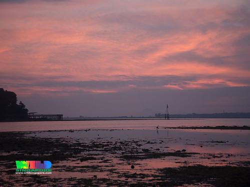 Sunrise over Chek Jawa from Pulau Sekudu
