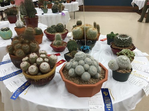 Central Oklahoma Cacti and Succulent Show
