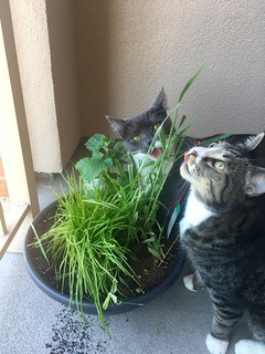 Watson & Crick love their new cat garden