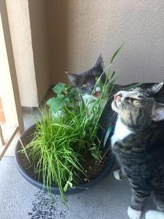 Watson & Crick love their new cat garden