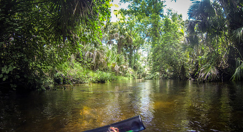 Juniper Springs Creek-11