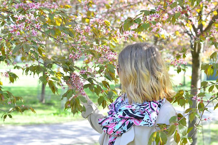 kirsikkapuisto2