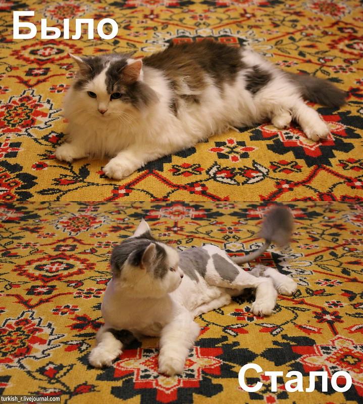 Кот_3_1