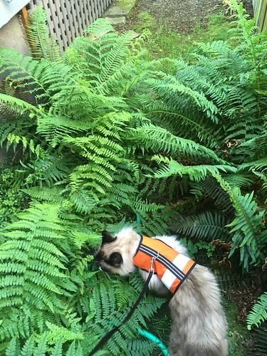 Fluffy in the Backyard Jungle
