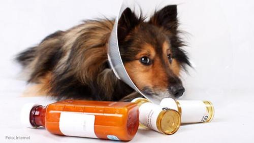 mascotas-curacion