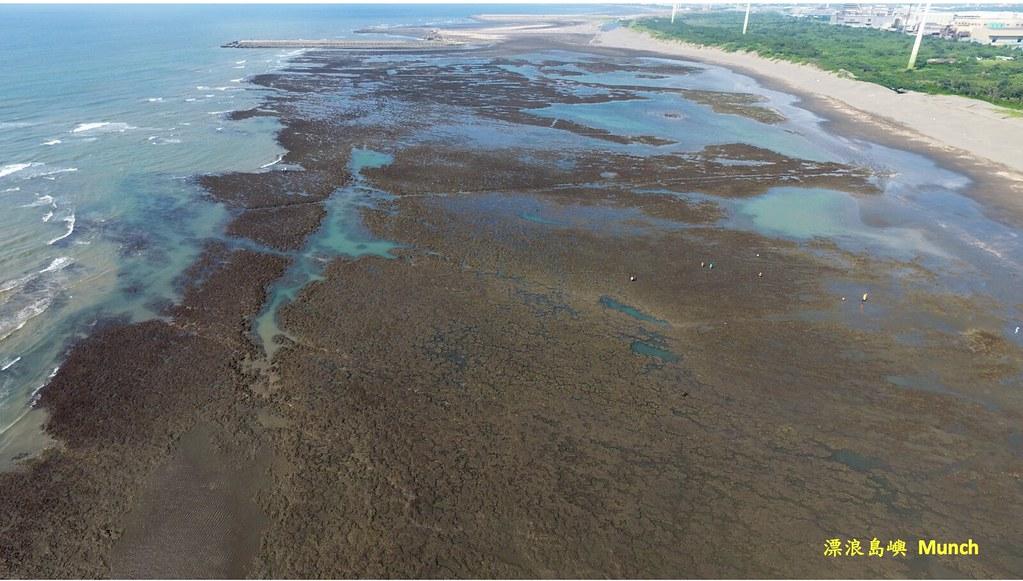 發育完整的大潭藻礁。圖片來源:漂浪島嶼 Munch