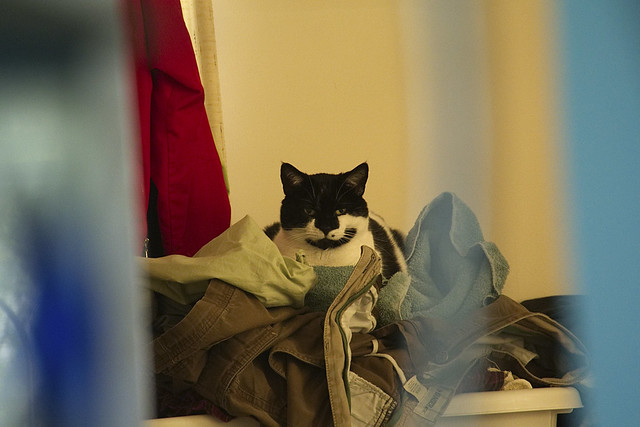 The Dirty Clothes Kitty